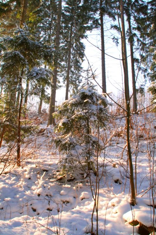 Winterbild vom Erzgebirge